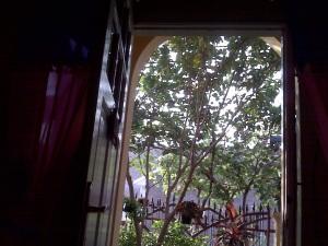 Rumah yang asri sebagai gaya hidup hijau