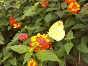 Bunga dan kupu-kupu