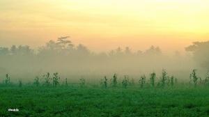 Kabut pagi